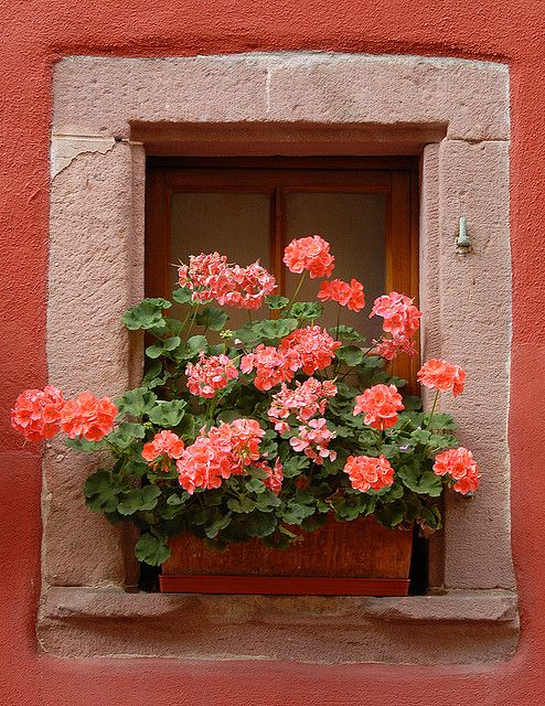 Windowbox Alsace, France by MicheleMoss, via Flickr