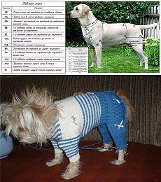 Тема - Учимся вязать с нуля :: Самые маленькие собаки. Фото. Все породы маленьких собак. Декоративные маленькие собачки. Фотографии пород и щенков Йоркширский терьер Чихуахуа Русский той терьер Мальтийская болонка Ши-тцу Ветеринария Воспитание Уход Груминг Хендлинг Выкройки и схемы вязания одежды для собак.