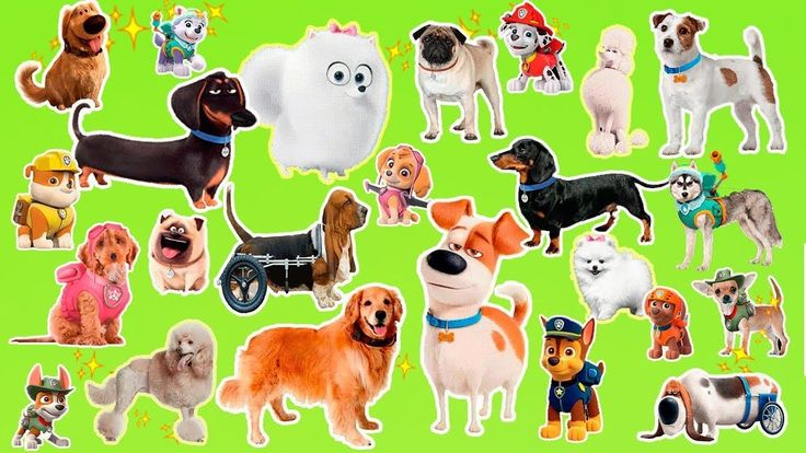 Learn the cartoon dogs breeds   Popular cartoon dogs and their real anim...