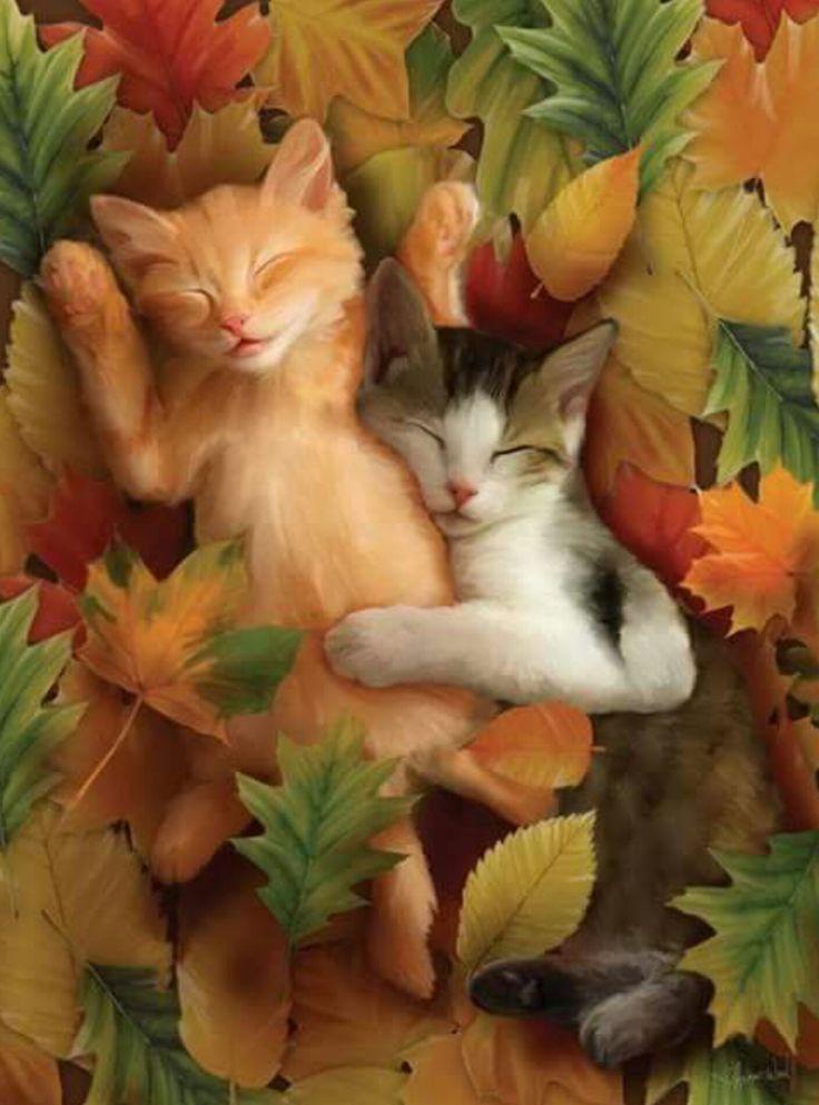 Resultado de imagen para gatitos para grupos gabitos con glitter y movimiento y risas