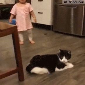 Never Trust a cat | Gif Finder – Find and Share funny animated gifs. TC - ok if real & sure looks like it-this cat would be convicted of intent! In any court of law!!!!