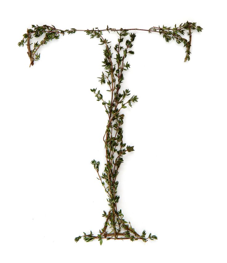 T-for-thyme  (mary jo hoffman)
