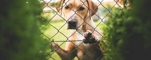 Toxic Foods for Dogs - Fruits, Vegetables and Nuts » DogHeirs | Where Dogs Are Family « Keywords: toxic foods, foods to avoid, poisonous foods, toxic chemicals