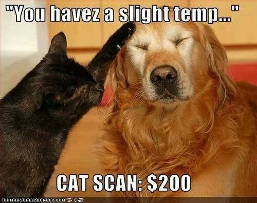 """You havez a slight temp..."" CAT SCAN: $200 (black cat with a yellow lab)"