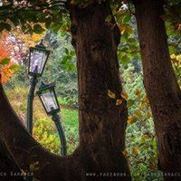 Torino-Parco Valentino- Lampioni innamorati-