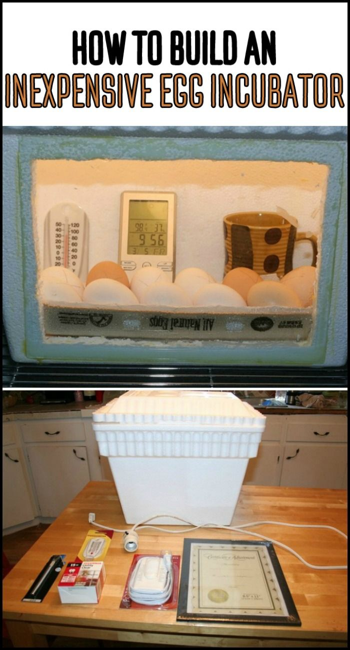 Cabinet Incubator Kit The 25 Best Ideas About Egg Incubator On Pinterest Chicken
