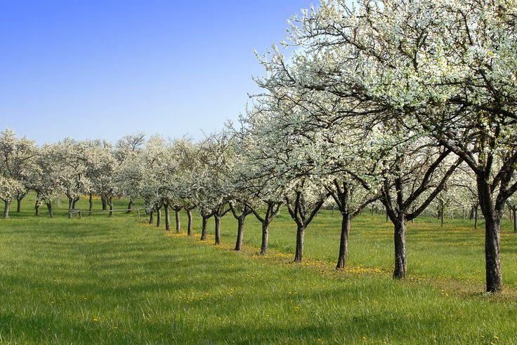 Parcourez les Côtes de #Meuse avec ses vergers de mirabelliers, ses vignes, le lac de Madine, l'étang de Lachaussée, la butte de #Montsec… Crédit photo : Michel PETIT