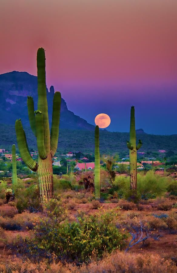 Always thought these photos had to be photo-shopped until we lived there and discovered this is what AZ sunsets look like!