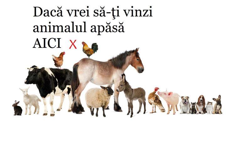 Piața Animalelor