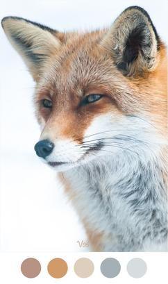 VOS - Zachte tinten grijs, beige en oranje / bruin van de vos