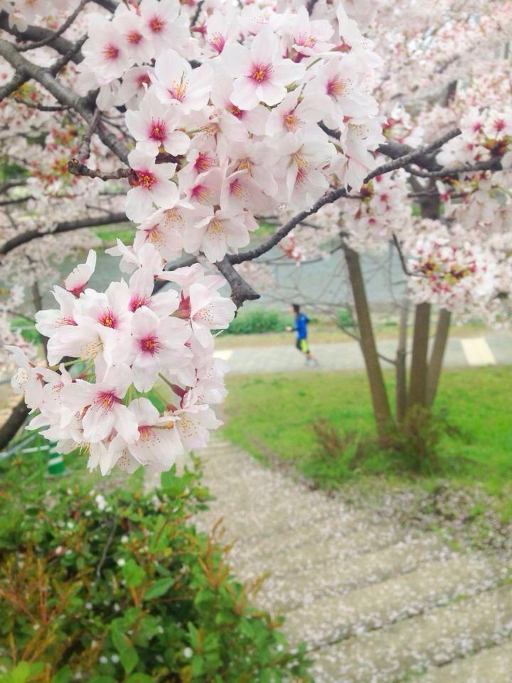 running, morning, spring