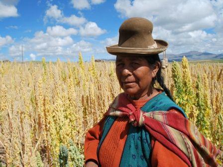 Quinoa-Mother-Grain.jpg 448×336 pixels