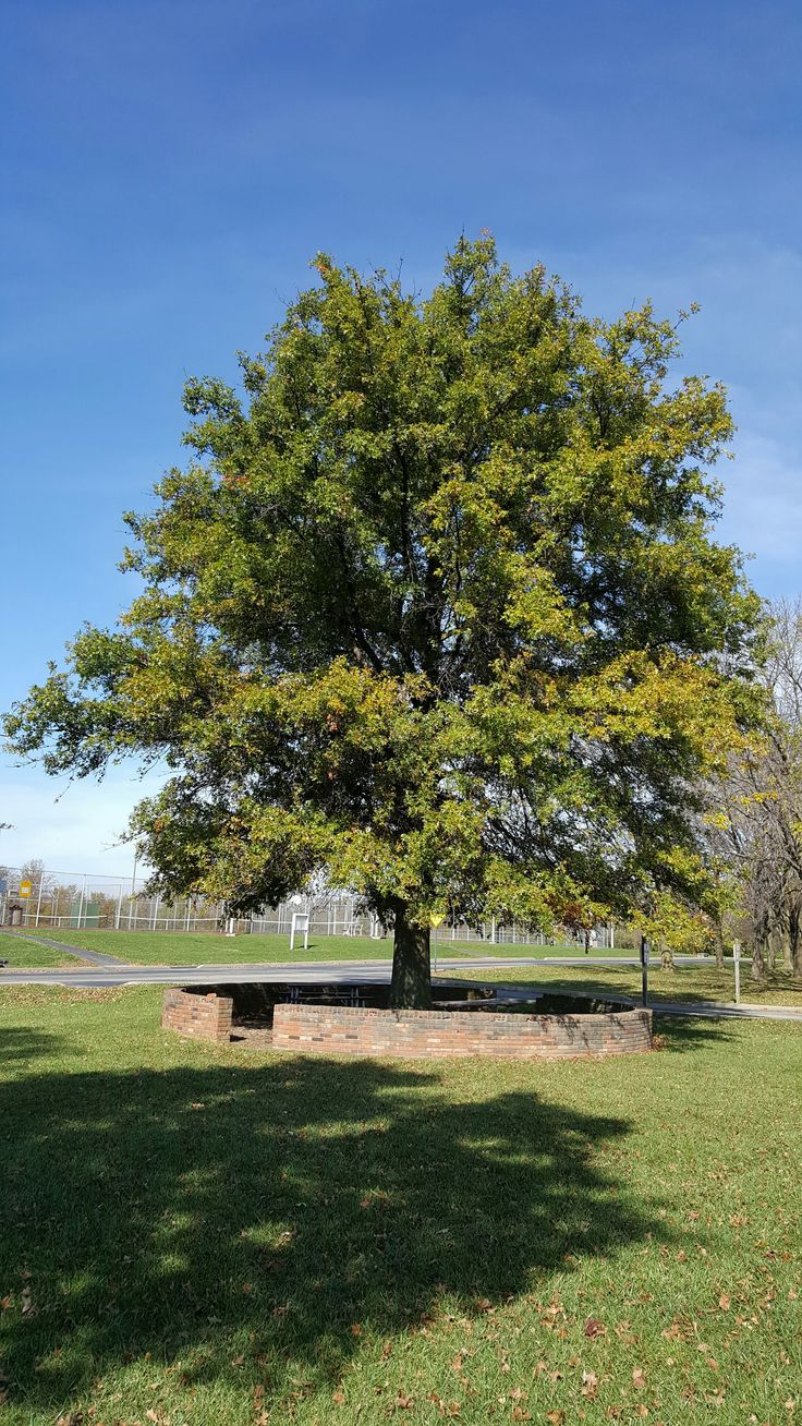 1000 id es sur le th me arbres croissance rapide sur pinterest arbre fleurs et am nagement - Arbres et arbustes a croissance rapide ...