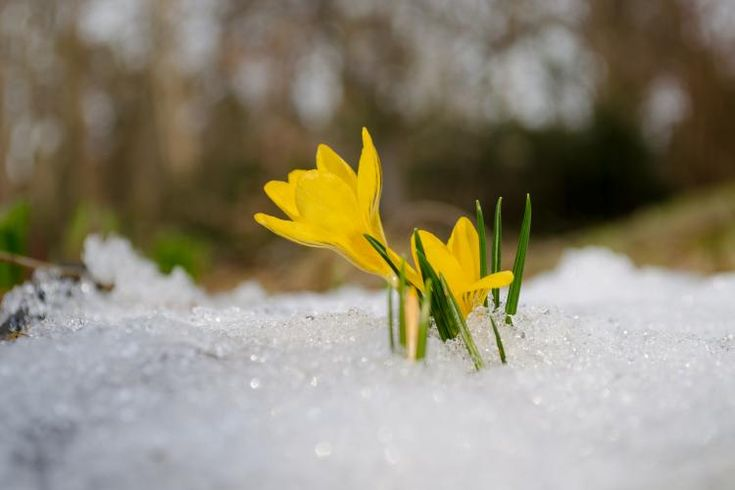 10 things about the first day of spring in the Northern Hemisphere you might not know..