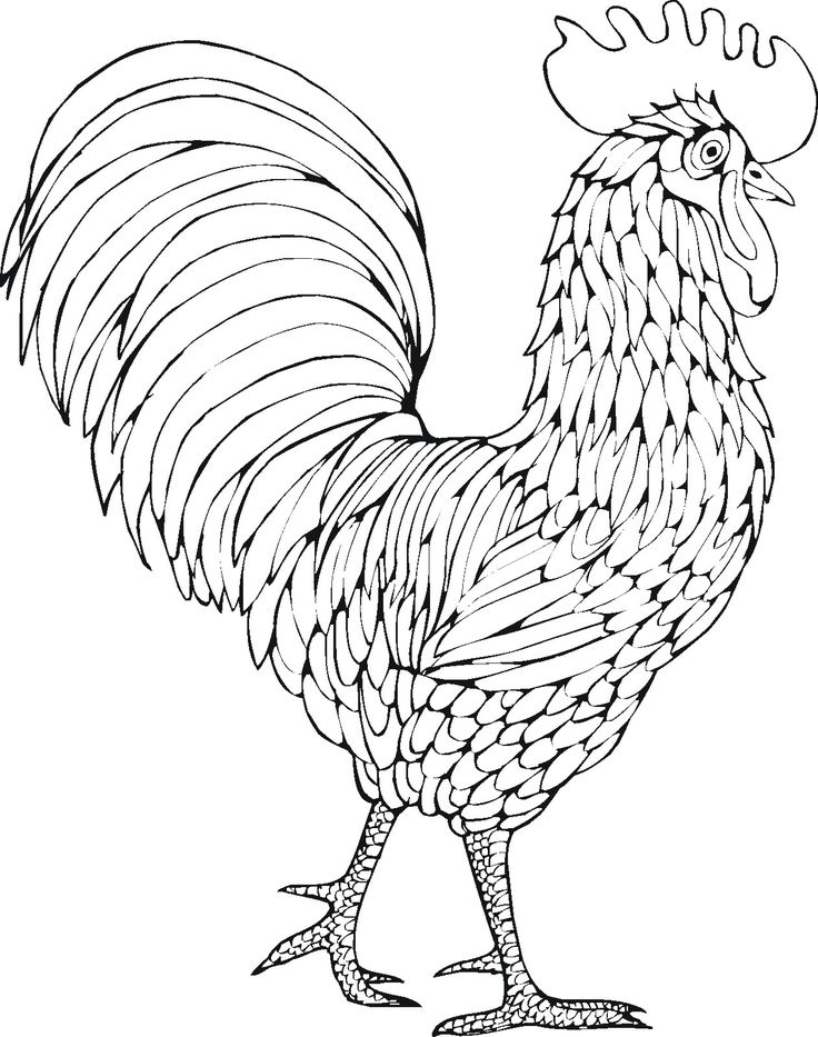Line Drawing Rooster : Best images about pyrography on pinterest wood