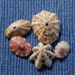 A Beginner's Guide to Shells | Limpets & Keyhole Limpets | CoastalLiving.com