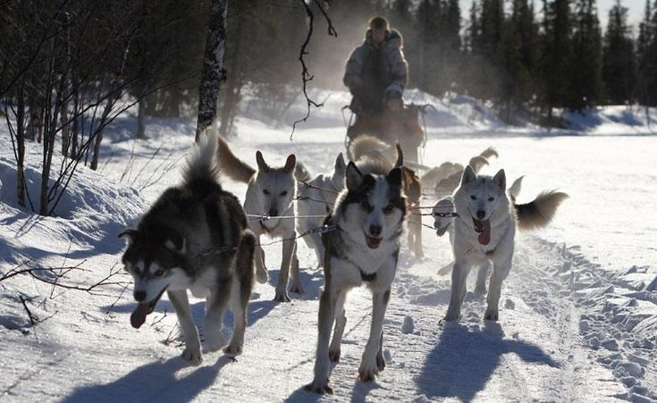 Northern lights holiday to Tromso, Abisko and the Icehotel - Discover the World