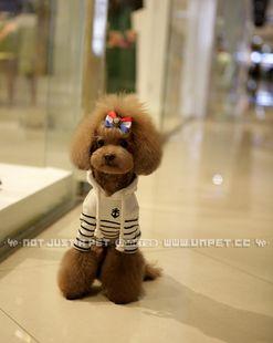 小型犬 服トイプードル 服チワワ 服 フード付きボーダートップス