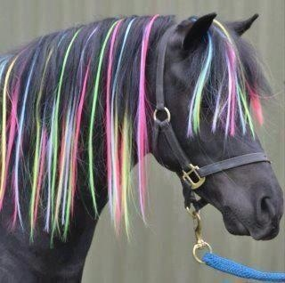 horse clips manes &tail