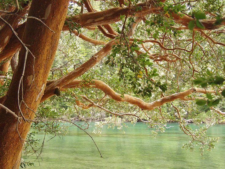 Parque Nacional Arrayanes