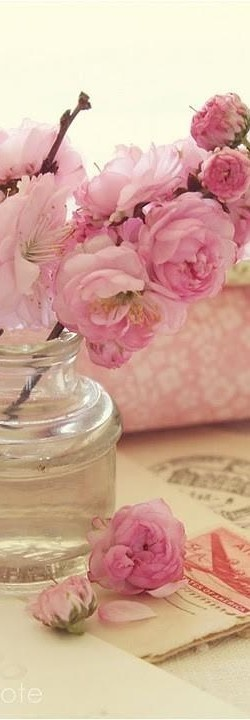 pink old fashioned flowers - beautiful