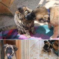 Ohana Dog_Blog: Pastore tedesco cucciolo in adozione