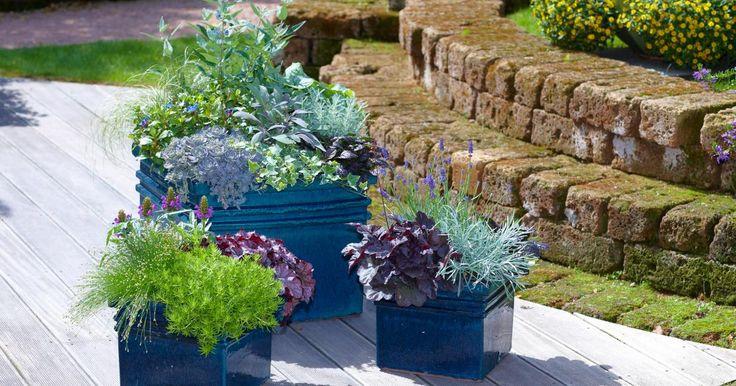 Herbstbepflanzung für Balkon und Terrasse - Mein schöner Garten