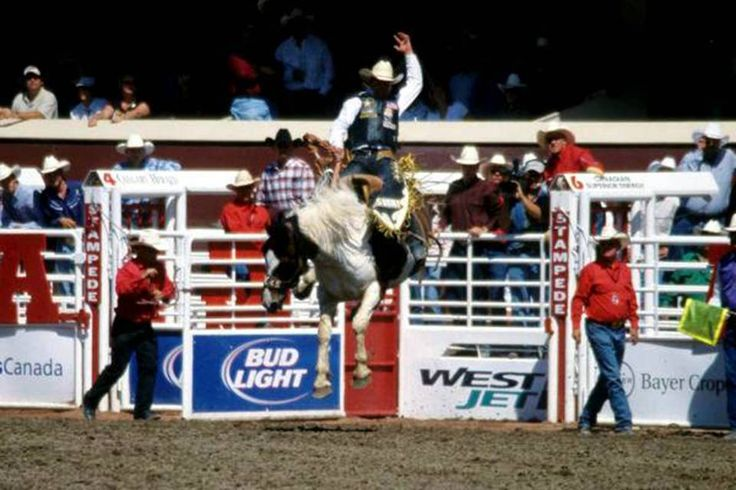 1000 Images About Rodeo On Pinterest