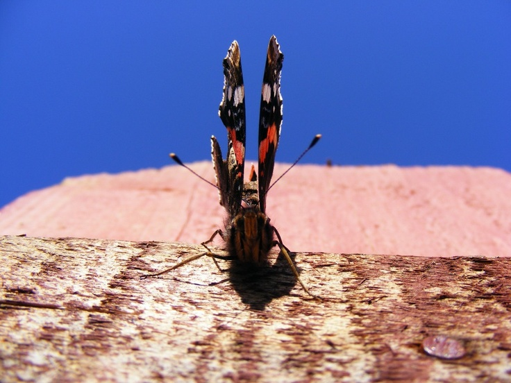 Colored Butterfly - Public Domain Photos, Free Images for Commercial Use