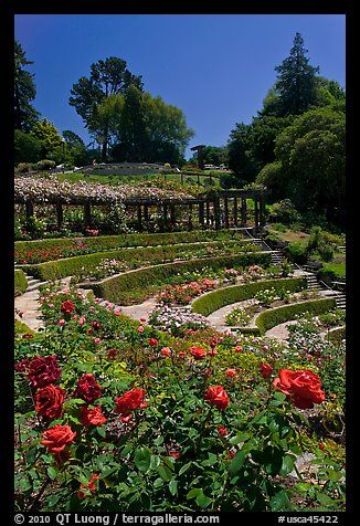 Picture/photo (Formal Gardens): Berkeley Rose Garden. Berkeley, California, USA