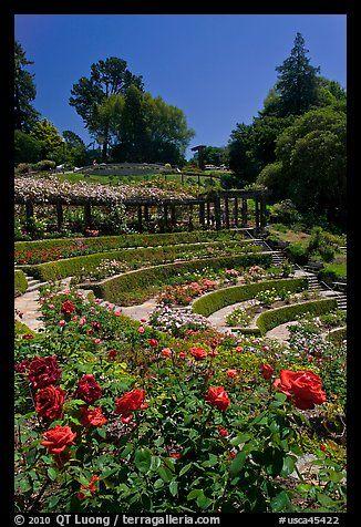 Berkeley Rose Garden. Berkeley, California, USA