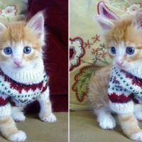 Cat-Sweater-Patterns