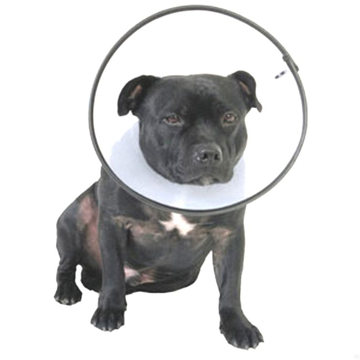 Dog Cones Collar