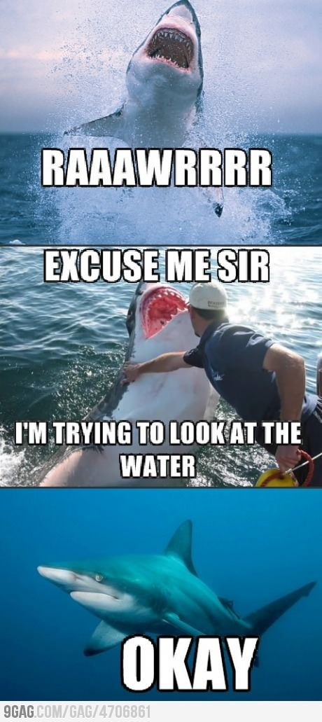 ohh shark humor. it would be amazing to touch a shark.