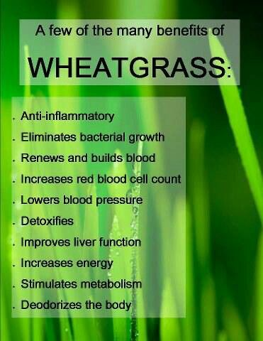 Wheat Grass! My new fave, can't believe it took me so long to find out about all the benefits. A shot of wheat grass a day for this girl :)