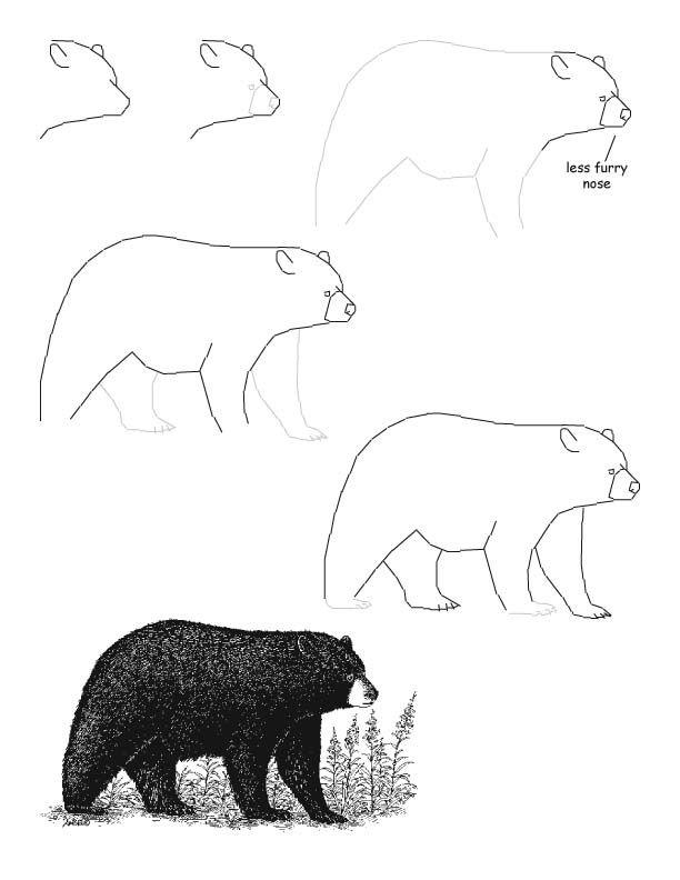 Black bear good to practice texture, shading