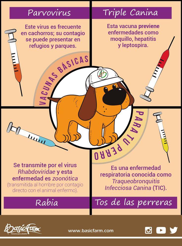 Vacunas básicas para tu perro: • Parvovirus: Este virus es frecuente en cachorros; su contagio se puede presentar en refugios y parques. • Triple Canina: Esta vacuna previene enfermedades como moquillo, hepatitis y leptospira. • Rabia: Se transmite por el virus Rhabdoviridae y esta enfermedad es zoonótica (transmitida al hombre por contagio directo con el animal enfermo). • Tos de las perreras: Es una enfermedad respiratoria conocida como Traqueobronquitis Infecciosa Canina (TIC). No olvides…