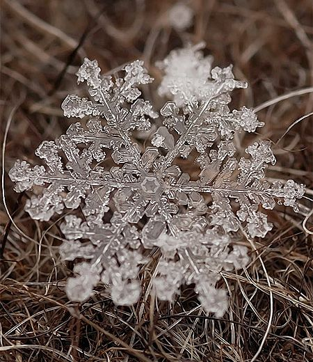 Macro lens photographs of snowflakes and ice crystals by Russian photographer Andrey Osokin.