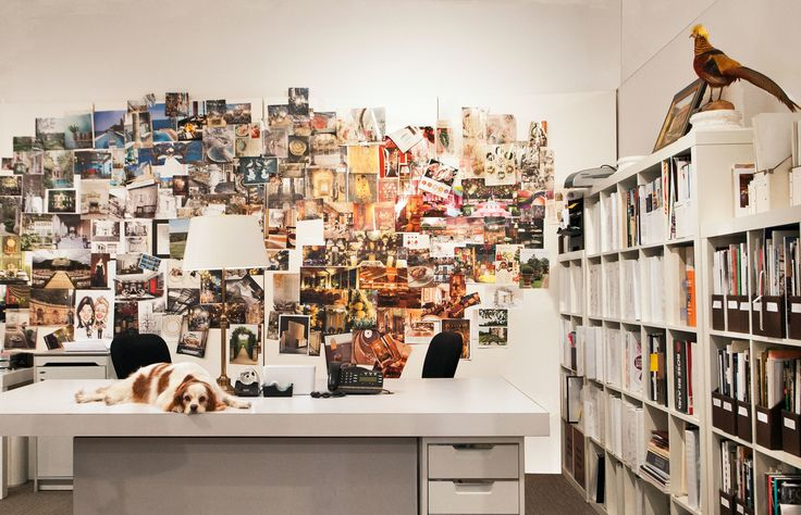 Cute Dogs in Offices - K9-5 New York Dogs At Work | Architectural Digest