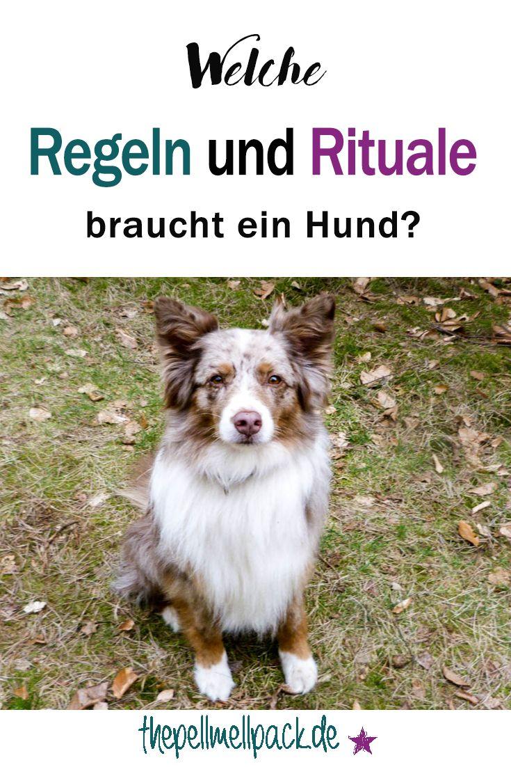Regeln und Rituale im Zusammenleben mit Hund sind unglaublich wichtig | Hundeerziehung | Hundetraining | Alltagstraining | thepellmellpack.de