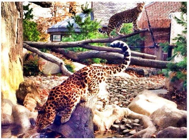 Staten Island Zoo 641 Broadway 718-442-3101