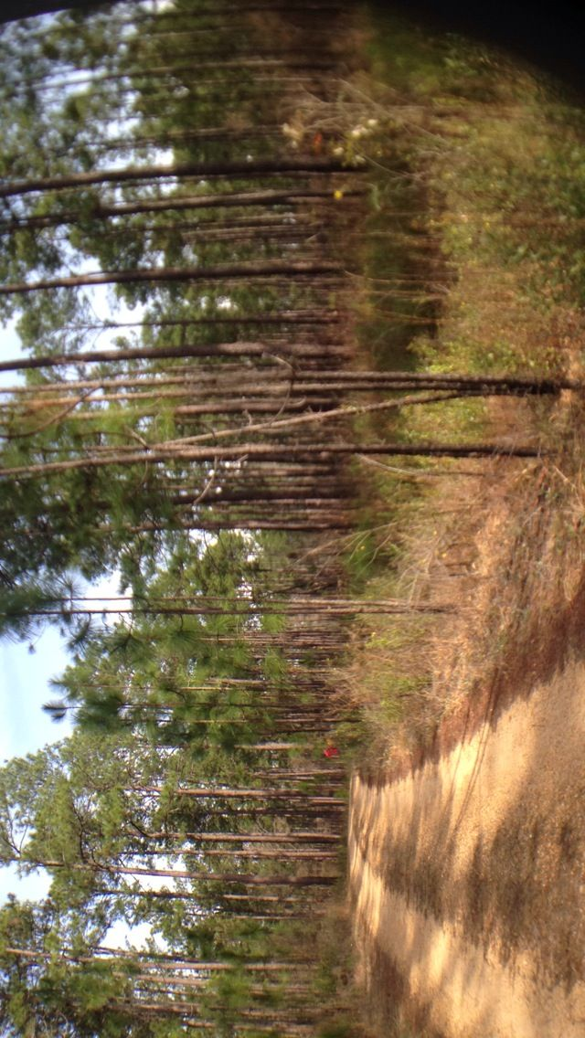 De Soto National Forest in Mississippi - Spring Break 2015