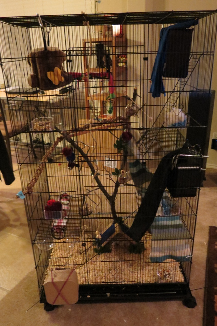 Flying Squirrel Cage Pimped Out Our Flying Squirrels