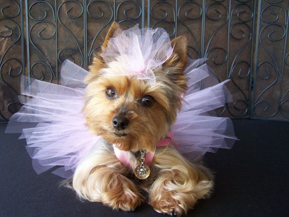 56 Best Images About I Love Yorkies On Pinterest Toy