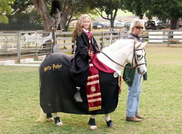 The 11 best images about Halloween for Horses on Pinterest - awesome halloween costume ideas