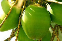 CBN Reports on Coconut Oil for Alzheimer's - Great video report on Dr. Newport and her husband!