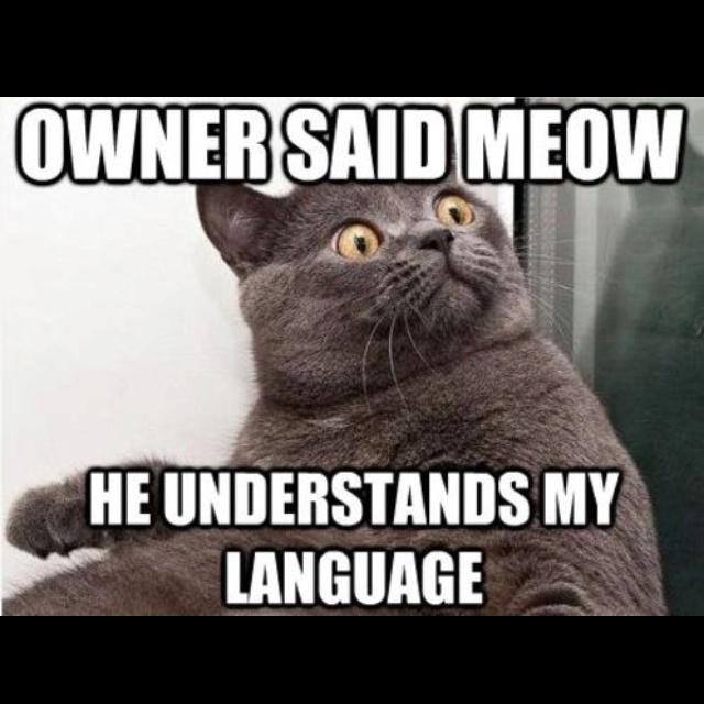 :DFunny Pics, Meow, Funny Cat, Crazy Cat, Funny Stuff, Funny Animal, Funny Memes, Cat Lady, Cat Memes