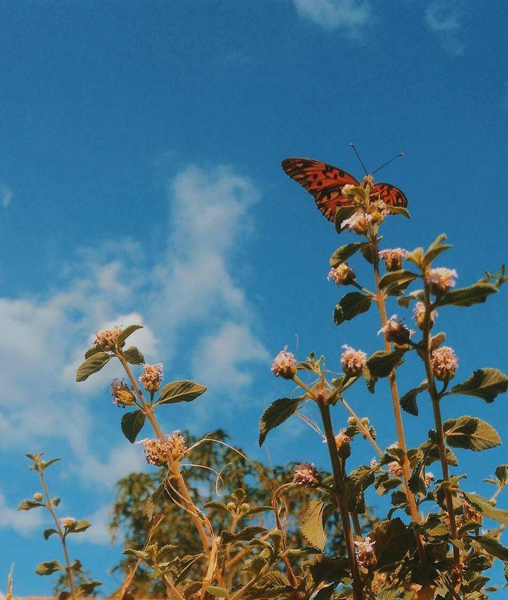 Butterfly fly away Aesthetic art, Spring aesthetic