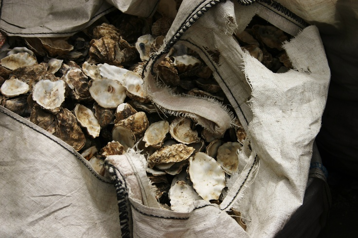 Oysters in Whitstable, England