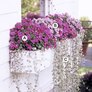 shady container Impatiens 'Accent Pink', Impatiens 'Pink Swirl', Dichondra 'Silver Falls' Window